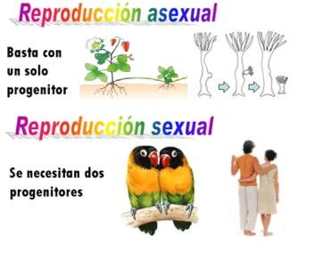 Reproduccion sexual y asexual resumen