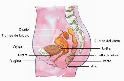 La función reproductora de la mujer. | Biología