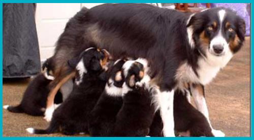 Clasificación De Los Animales Módulo De Naturales Adaptado Primario